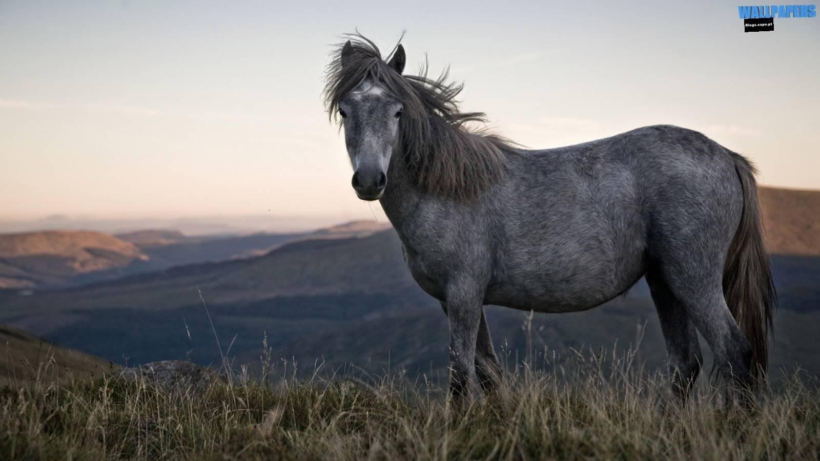 Best Wallpaper Horse High Definition - beautiful-wild-horse-wallpaper-1600x900  Photograph_757118.jpg